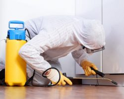 Обследование квартиры на предмет вредных веществ: особенности и правила