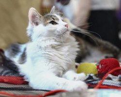 Чипирование животных: столичные ветклиники оказывают сервис со скидкой
