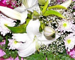 «Оптцвет» — оптовая цветочная база с низкими ценами