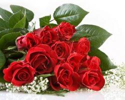 Цветы оптом от с доставкой от компании Талифлор