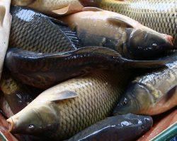 Подмосковные власти поддержали рыбоводческое производство