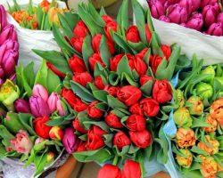 Продажа цветов: в МО работает более 1.3 тысячи торговых точек