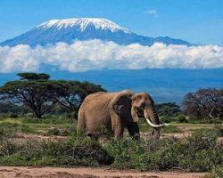 Ищете острые ощущения? Пора покорить Килиманджаро!