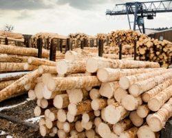 Экологичное деревообрабатывающее производство