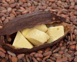 Применение масла какао в кулинарии