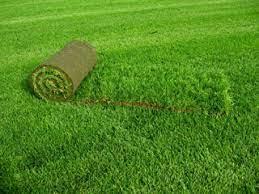 Как осуществляется посадка газона?