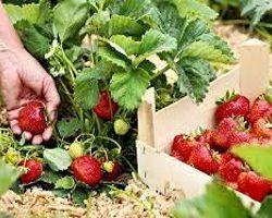 В строительство теплиц для ягод в Подмосковье будет вложен почти миллиард
