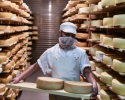 В Подмосковье появится еще одно сырное производство