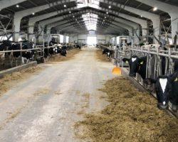 В подмосковном Можайске появится новая молочная ферма