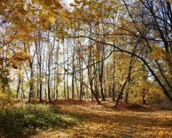 Москвичи получили экомаршруты для прогулок и отдыха